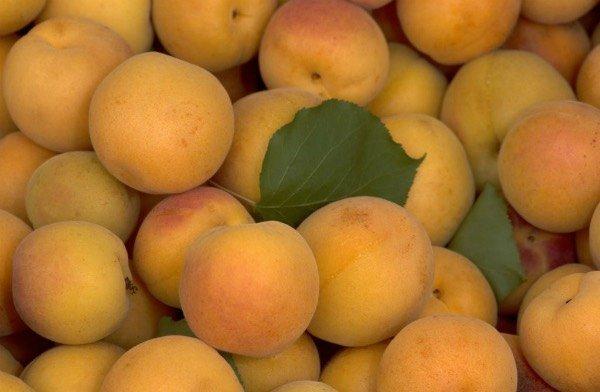 LE ALBICOCCHE: 5 buoni motivi per mangiarle!