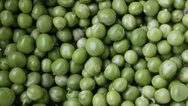 I PISELLI: sono legumi o verdura?