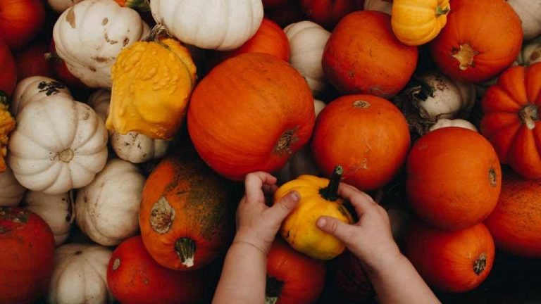 La ZUCCA: nutrienti, benefici e modi di mangiarla
